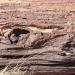 Versteinertes Holz (Petrified Forest)