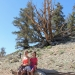 In the Ancient Bristlecone Pine Forest