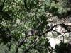 Suchbild mit Eichhörnchen
